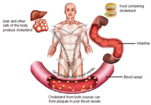 4-good-cholesterol