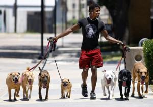 7-dog-walker