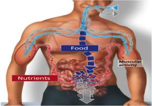 8-Better metabolism