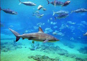 1-Sharks