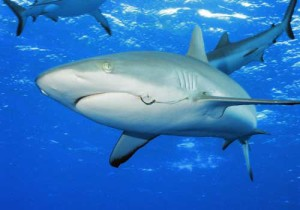 10-Sharks