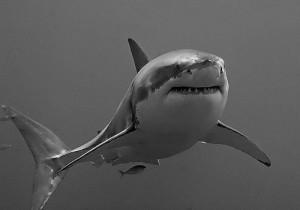 5-Sharks