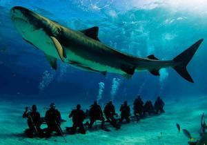 8-Sharks