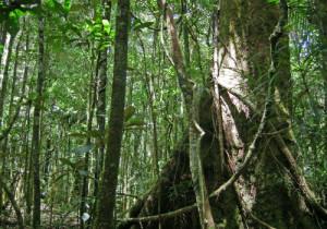 2-New Caledonia