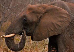 3-elephant