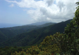 4-The Philippine Forests