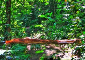 5-Atlantic Forest