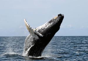 9-whale