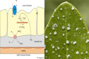 secretion-vs-excretion